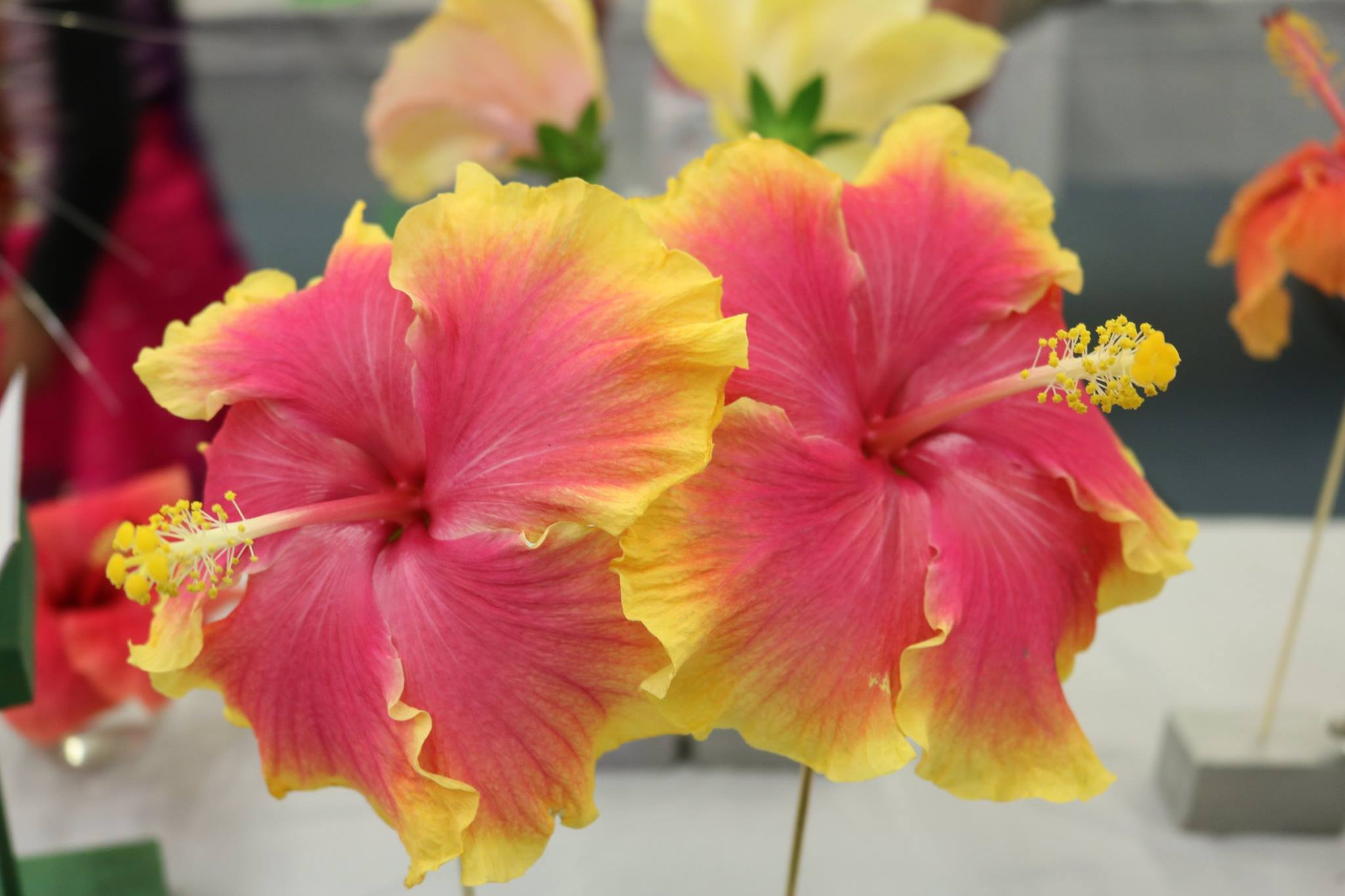 Beautiful flowers at Flower Show 2017