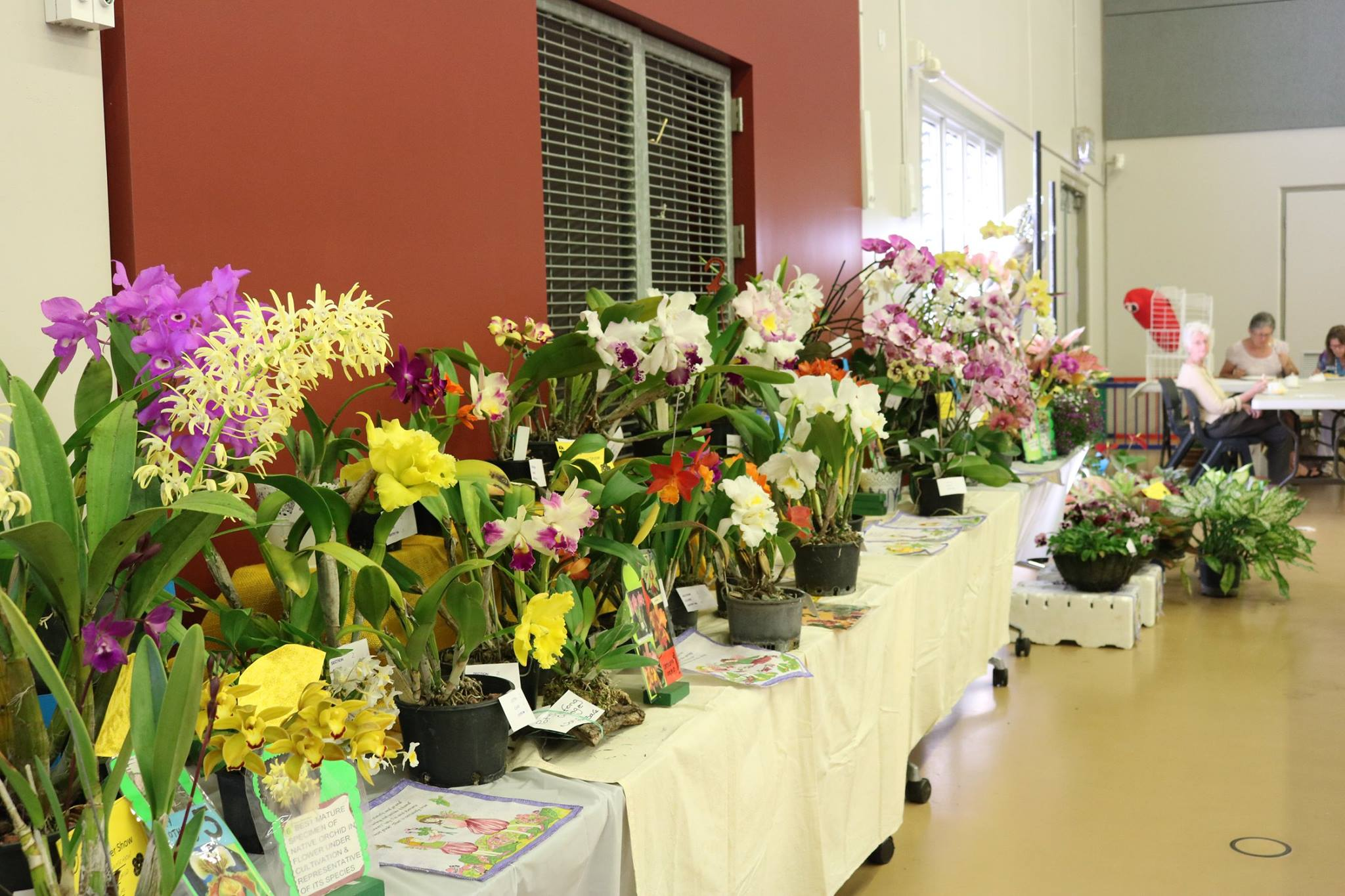 Flower Show 2017 more displays